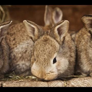 Научно-практический семинар «Современное кролиководство»