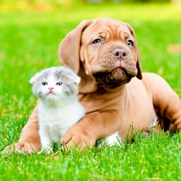 Дерматиты и экземы у животных