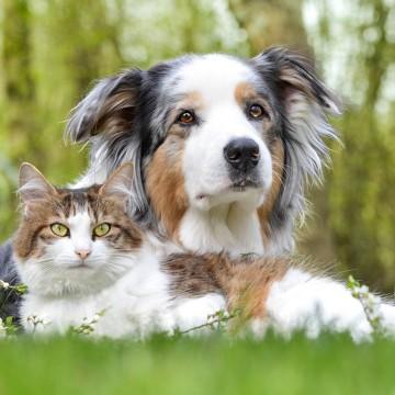 Авитаминоз для значительного количества животных является актуальной проблемой.