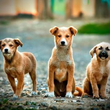 День беспородной собаки