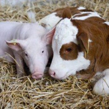 «Ветсинтез» провёл встречу представителей животноводческих хозяйств на Закарпатье