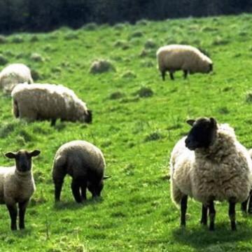 Семинаре «Технологические аспекты ведения романовского овцеводства в условиях юга Украины»