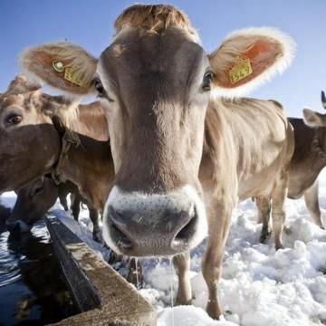"""ООО """"ВЕТСИНТЕЗ"""" провел семинар """"Актуальні проблеми тваринництва та сучасні методи їх вирішення"""""""